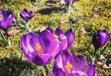 A takie Świnoujście znacie - Wiosna w parku