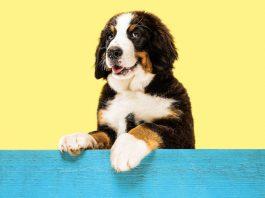 Ładne imiona dla psa – mini poradnik